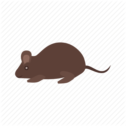 Rat,Mouse,Muridae,Rodent,Muroidea,Pest,Beaver,meadow jumping mouse,Illustration,Gerbil,Muskrat,Tail,Art